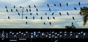 Birds on the Wires, Jarbas Agnelli (fot+part.)